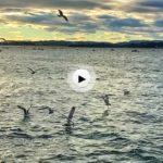 Las gaviotas, la bahía y el viento sur