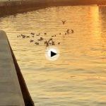A las gaviotas también les encantan estos bellos amaneceres